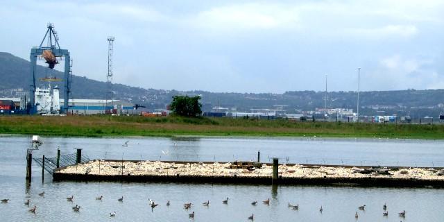 アジサシの営巣用の人工島 (ベルファスト港保護区)