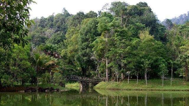 ガチョウのいる池