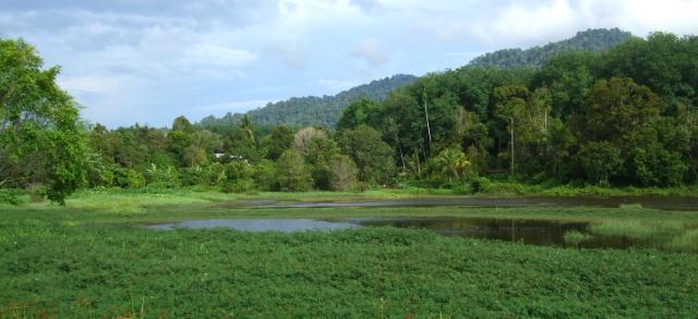 リュウキュウガモがいた池 ランカウイ島