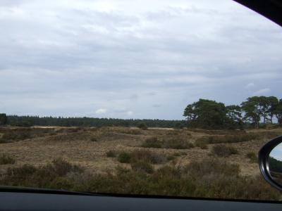 ヒースの茂る荒野 moorland