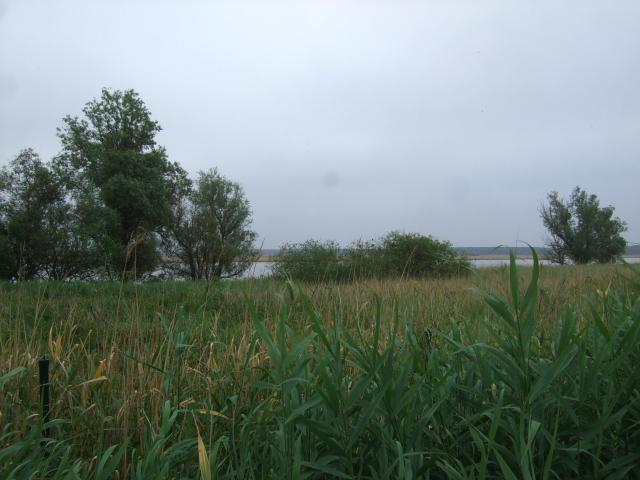 ヌマヨシキリのいた風景 オースト・バールデルス・プラッセン 東バールデルス堤防 2011/06/06 Photo by Kohyuh