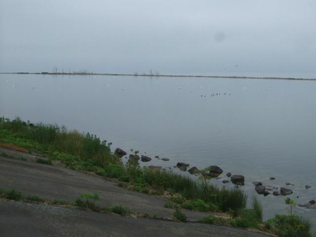 コザクラバシガンのいた池 小堤防の北側 2011/06/06 Photo by Kohyuh