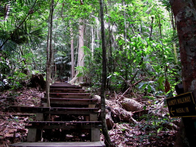 Path to Canopy Walkway, Taman Negara, Malaysia 2010/06/07 Photo by Kohyuh