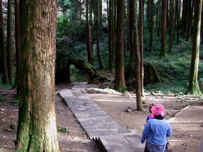 散策路の風景 (1) 倒木のゲートが見える 2012/03/03 Photo by Kohyuh