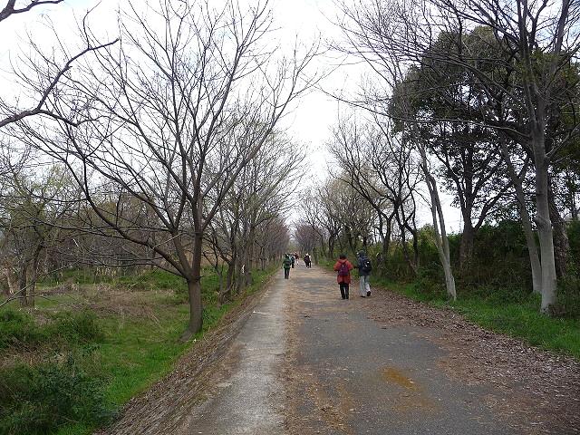 枚方 - 牧野 (淀川左岸 の道) 2013/03/26 Photo by Hosoi