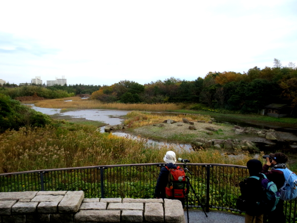 葛西臨海公園 Ksai Rinkai Park (1)