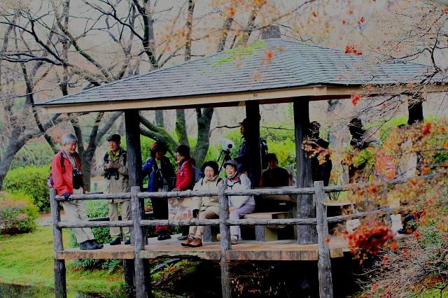 植物園の東屋にて 2013/12/19 Photo by Manda